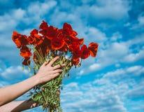 Μεγάλη ανθοδέσμη των κόκκινων παπαρουνών στα χέρια γυναικών Στοκ Εικόνα