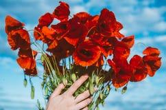 Μεγάλη ανθοδέσμη των κόκκινων παπαρουνών στα χέρια γυναικών Στοκ εικόνα με δικαίωμα ελεύθερης χρήσης