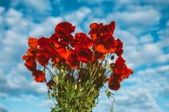 Μεγάλη ανθοδέσμη των κόκκινων παπαρουνών Στοκ Φωτογραφία