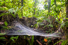 Μεγάλη αράχνη Ιστού Στοκ εικόνα με δικαίωμα ελεύθερης χρήσης
