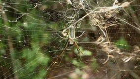 Μεγάλη αράχνη στον Ιστό απόθεμα βίντεο