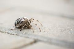 Μεγάλη αράχνη σφαιρών με το φύλλο Στοκ φωτογραφία με δικαίωμα ελεύθερης χρήσης