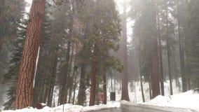 Μεγάλη δασική Καλιφόρνια Στοκ εικόνες με δικαίωμα ελεύθερης χρήσης