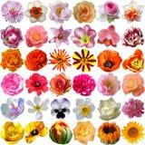 Μεγάλη επιλογή των διάφορων λουλουδιών Στοκ Φωτογραφίες