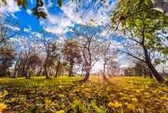 Μεγάλη ελαφριά, μεγάλη θέση, όμορφος κήπος Στοκ φωτογραφία με δικαίωμα ελεύθερης χρήσης
