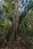 Μεγάλη ζούγκλα Madre de Dios Περού του Αμαζονίου δέντρων περουβιανή στοκ εικόνες