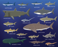 Μεγάλη διανυσματική απεικόνιση κινούμενων σχεδίων σύγκρισης μεγέθους καρχαριών διανυσματική απεικόνιση