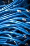 Μεγάλη ομάδα μπλε καλωδίων Διαδικτύου utp Στοκ φωτογραφίες με δικαίωμα ελεύθερης χρήσης