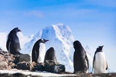 Μεγάλη ομάδα penguins Στοκ Φωτογραφία