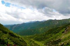 Μεγάλη, πράσινη κοιλάδα σε ένα υπόβαθρο των βουνών στοκ εικόνες με δικαίωμα ελεύθερης χρήσης