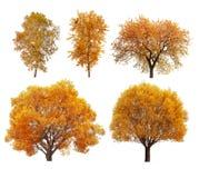 Μεγάλη συλλογή των δέντρων φθινοπώρου Στοκ εικόνες με δικαίωμα ελεύθερης χρήσης