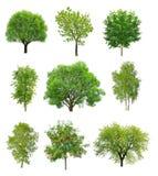 Μεγάλη συλλογή των αποβαλλόμενων δέντρων Στοκ φωτογραφίες με δικαίωμα ελεύθερης χρήσης