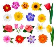 Μεγάλη συλλογή των ζωηρόχρωμων λουλουδιών. Στοκ Φωτογραφίες