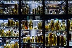Μεγάλη συλλογή των ζώων στο οινόπνευμα Στοκ Φωτογραφία