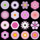 Μεγάλη συλλογή των διάφορων ρόδινων λουλουδιών σχεδίων που απομονώνεται στο Μαύρο Στοκ Φωτογραφίες