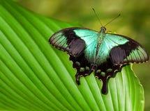 Μεγάλη τροπική πεταλούδα Στοκ εικόνα με δικαίωμα ελεύθερης χρήσης