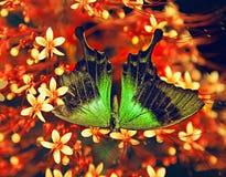 Μεγάλη τροπική πεταλούδα Στοκ Φωτογραφίες