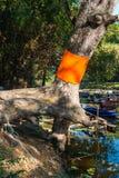 Μεγάλη χειροτονία δέντρων με την κίτρινη τήβεννο στην πεποίθηση βουδισμού Στοκ Φωτογραφίες