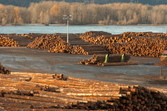 Μεγάλη όχθη ποταμού Κολούμπια εργοστασίου επεξεργασίας ξυλείας κούτσουρων ξυλείας ξύλινη Στοκ Φωτογραφίες