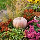 Μεγάλη ώριμη κολοκύθα που βρίσκεται στο έδαφος στον κήπο μεταξύ των λουλουδιών Στοκ Εικόνες