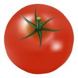 Μεγάλη ώριμη κόκκινη φρέσκια ντομάτα με το μαϊντανό σε ένα άσπρο υπόβαθρο ελεύθερη απεικόνιση δικαιώματος