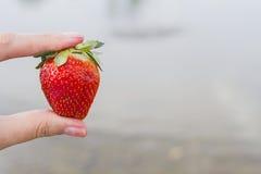 Μεγάλη ώριμη juicy φράουλα σε ένα θηλυκό χέρι σε ένα υπόβαθρο νερού ποταμού Στοκ εικόνες με δικαίωμα ελεύθερης χρήσης