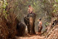 Μεγάλοι ελέφαντας και μωρό που περπατούν στη ζούγκλα Στοκ Εικόνες