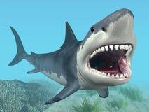 Μεγάλος άσπρος καρχαρίας Στοκ φωτογραφίες με δικαίωμα ελεύθερης χρήσης