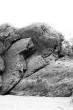 Μεγάλος απομονωμένος απότομος βράχος Στοκ Εικόνα