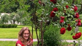 Μεγάλος αυξήθηκε θάμνος λουλουδιών και η έγκυος γυναίκα ρίχνει αυξήθηκε πέταλα απόθεμα βίντεο