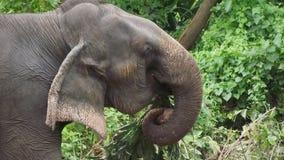 μεγάλος ελέφαντας Κατανάλωση Κάπου στη Νότια Ασία Στοκ φωτογραφίες με δικαίωμα ελεύθερης χρήσης