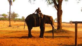 Μεγάλος ελέφαντας που φέρνει έναν άνθρωπο Στοκ Εικόνες