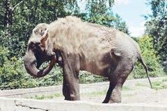 Μεγάλος ελέφαντας στη φύση Στοκ φωτογραφία με δικαίωμα ελεύθερης χρήσης