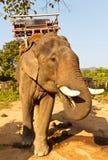 μεγάλος ελέφαντας Στοκ εικόνα με δικαίωμα ελεύθερης χρήσης