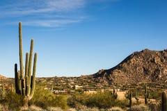 Μεγάλος κάκτος saguaro σε ένα κατοικημένο τοπίο ερήμων Στοκ φωτογραφία με δικαίωμα ελεύθερης χρήσης