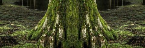 Μεγάλος κορμός δέντρων Στοκ Εικόνες