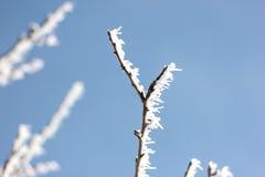 Μεγάλος κλώνος δέντρων με το χιόνι Στοκ Εικόνα