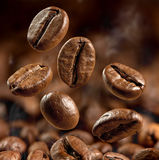 Μεγάλος μακρο πυροβολισμός φασολιών καφέ στοκ εικόνες