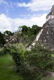 Μεγάλος ναός ιαγουάρων, Tikal, Γουατεμάλα Στοκ φωτογραφίες με δικαίωμα ελεύθερης χρήσης