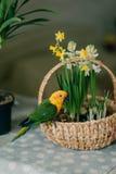 Μεγάλος παπαγάλος με ένα κίτρινο κεφάλι Στοκ εικόνες με δικαίωμα ελεύθερης χρήσης