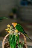 Μεγάλος παπαγάλος με ένα κίτρινο κεφάλι Στοκ Φωτογραφίες