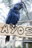 Μεγάλος παπαγάλος macaw Ένα μεγάλο πουλί στα φωτεινά κόκκινα γαλαζοπράσινα φω'τα Στοκ Φωτογραφίες