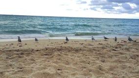 Μεγάλος πυροβολισμός του όμορφου ωκεάνιου νερού στην παραλία στο Μαϊάμι με τα πουλιά φιλμ μικρού μήκους