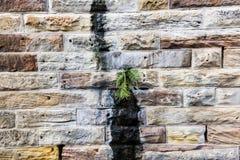 Μεγάλος τοίχος φραγμών ψαμμίτη με τη φτέρη Στοκ Εικόνες