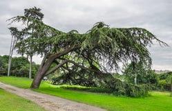 Μεγάλος το δέντρο στο πάρκο Στοκ εικόνα με δικαίωμα ελεύθερης χρήσης