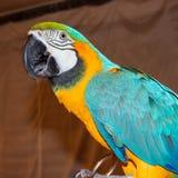 Μεγάλος τροπικός εξωτικός παπαγάλος στοκ εικόνες