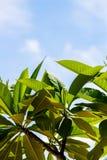 Μεγάλος τροπικός πράσινος βγάζει φύλλα υγρό με τις σταγόνες βροχής Στοκ φωτογραφία με δικαίωμα ελεύθερης χρήσης