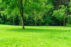 Μεγάλος χορτοτάπητας με τα δέντρα Στοκ φωτογραφία με δικαίωμα ελεύθερης χρήσης