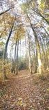Μεγάλος ως δάσος Στοκ Εικόνες