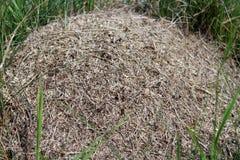 Μεγάλος λόφος μυρμηγκιών Στοκ εικόνες με δικαίωμα ελεύθερης χρήσης